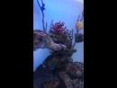 рыбки 3