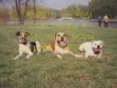 Как умирают животные.....Это видео я посвящаю своим собакам Рите,Чике,Харди,Данзету и Рики... мы вас любим.......помним........с
