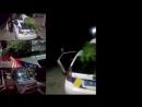 Що це таке робиться Поліцейські на службовому авто перевозили гігантський кущ конопель