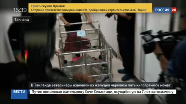 Новости на Россия 24 • Морскую черепаху облегчили на 900 монет » Freewka.com - Смотреть онлайн в хорощем качестве