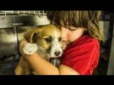 Шести месячный мальчик, рискуя своей жизнью, спас щенка...