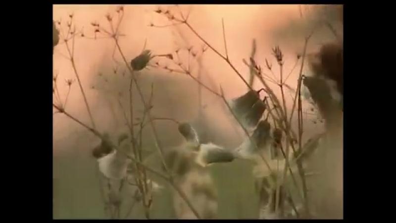 Музыка и душа Георгий Свиридов избранные произведения и изречения 2006
