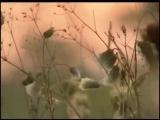 Музыка и душа. Георгий Свиридов избранные произведения и изречения 2006