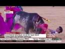 Впервые за 30 лет бык убил тореадора во время корриды