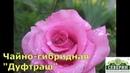 Шикарные розы Братьев Топалович из Сербии Группа чайно гибридные часть 2