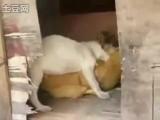 Собака трахает курицу