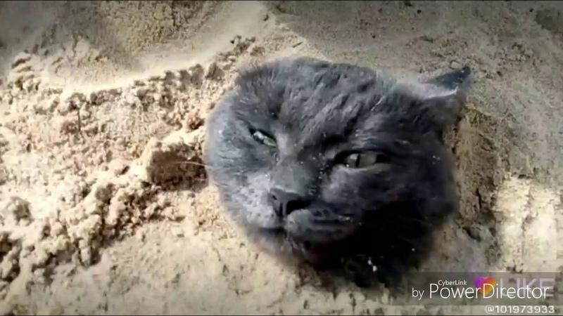 В Чебоксарах дети ради лайков закопали кота в песок и снимали видео