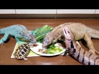 Рептилоиды кушоют 2ch webm