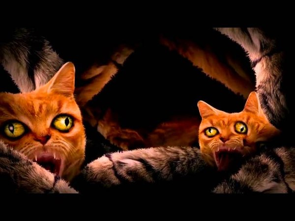 Run The Jewels Meowpurrdy feat Lil Bub Maceo Delonte Official Music Video