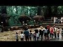 Atraksi Gajah di Taman Safari Prigen Pasuruan Jawa Timur