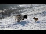 Отдых с собаками на пруду