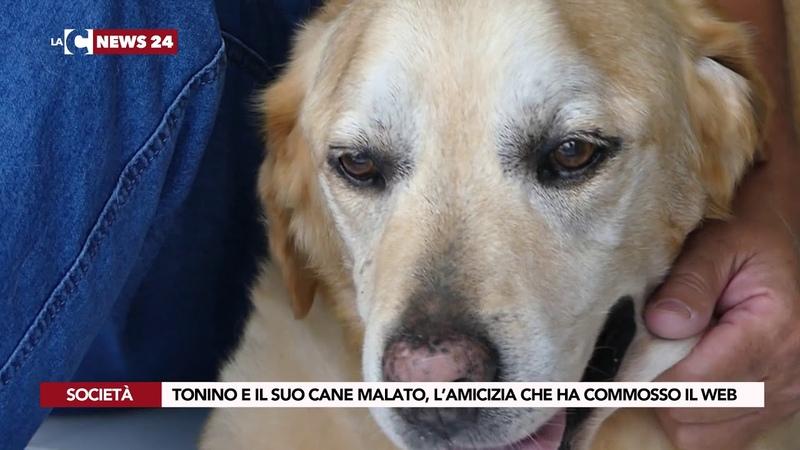 TONINO E IL SUO CANE MALATO L'AMICIZIA CHE HA COMMOSSO IL WEB