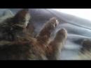 Мой кот Боня №5