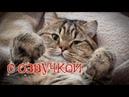 Приколы с котами и смешная озвучка животных – А ТЫ попробуй НЕ засмеяться! УГАР от PSO