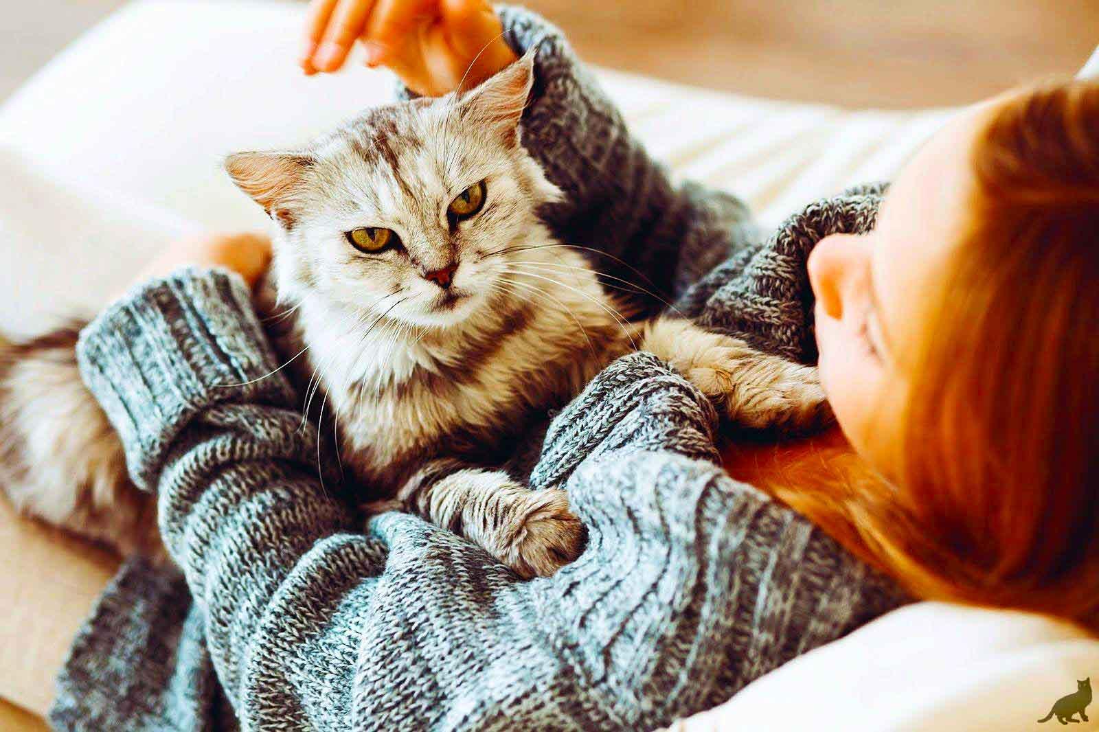 Спасение есть: таблетки от аллергии на кошку