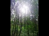 лес дышит