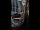 мой попуга гриша