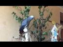 Викки балаболит
