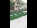 Когда собака поняла что я снимаю видео( смотреть до конца, он человеческим голосом послал меня нах)
