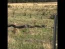 Змеи могут ползать и по проволочным оградам