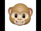 안녕하세요 저는 몽키입니다 원숭이에요?