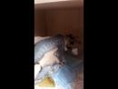 котик после операции