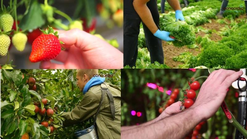 Farm Work in the UK - Concordia