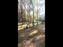 Тарзан парк... поехалииии....