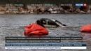 Новости на Россия 24 • Байкал очищают от утонувших машин