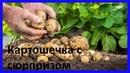 Как Азербайджан вернул Грузии ее картошку с сюрпризом