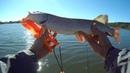 Кто клюёт на Рузе Окуни судаки щуки и рыба падла Спиннинг в сентябре