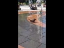 Dog has time of its life in water fountain