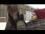 Медведь ухаживает за москвичом-инвалидом