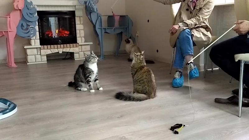 Шеймус и Сонечка играют в кафе