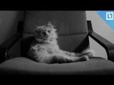 Кот остался без стриптиза