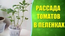 🍅 Рассада помидоров в пеленках Собственный опыт выращивания рассады в пеленках