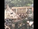 Гуанчжоу Зоопарк