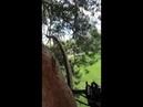 Арбористика Спил деревьев на высоте