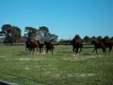 Horses 2, Eldon Park Retreat, Victoria, Australia
