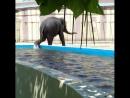 Звезда Ростовского зоопарка