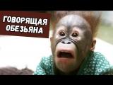 Дима Бикбаев. ХайпNews [01.04]