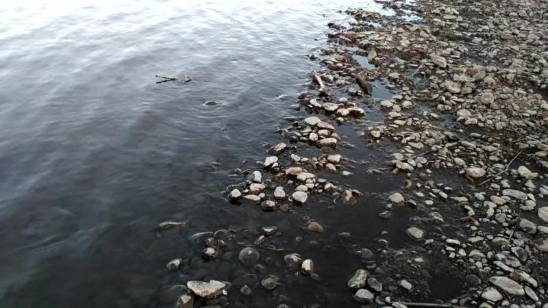 Река Бурея)