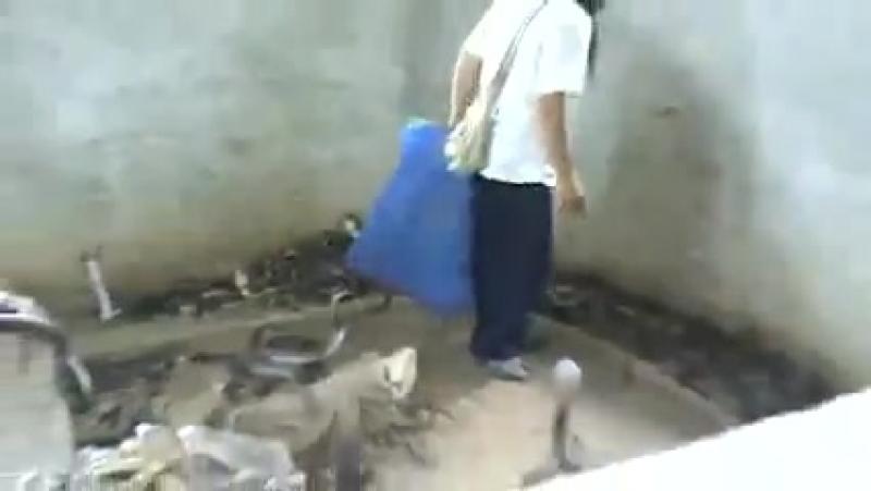Kobra Yılanları Adamın İşi Olursa