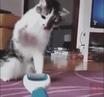 Strange paw · coub коуб