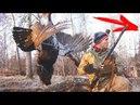 НЕЧТО НА ТОКУ НОЧНАЯ ЖЕСТЬ Не спокойная весенняя охота на глухарином току