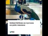 United Airlines не пустили на рейс павлина