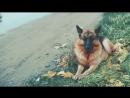 Самые преданные собаки в мире! Собаки верные друзья. Топ самых преданных׃ животные, существа, породы