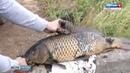 Обмелевший Мотовилихинский пруд заполонили рыбаки и «кладоискатели»