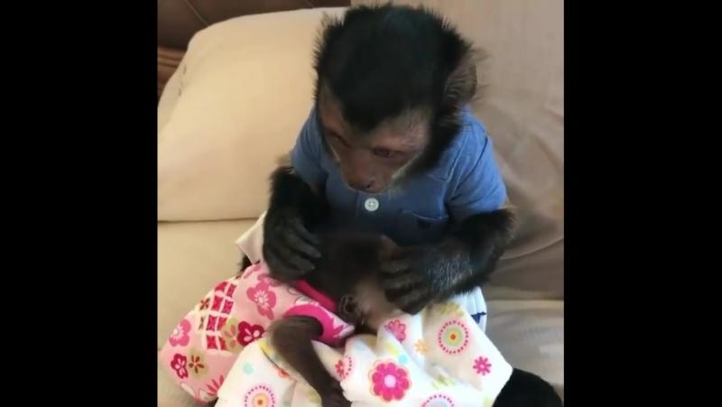 Очень миленькие обезьянки