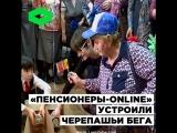 Пенсионеры-online устроили черепашьи бега | ROMB